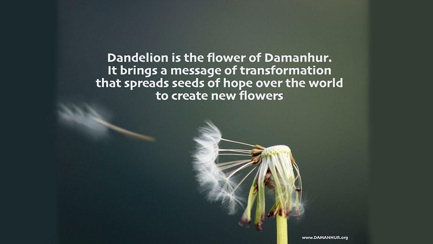 Dandelion, flower of Damanhur