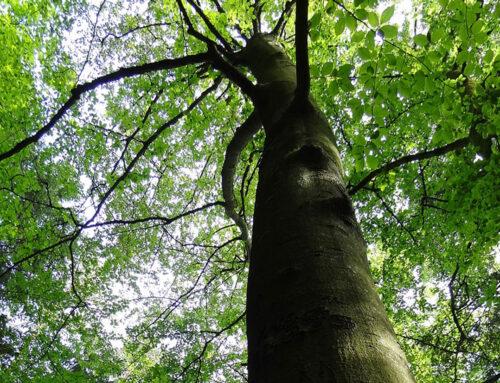 Global Tree Net Damanhur